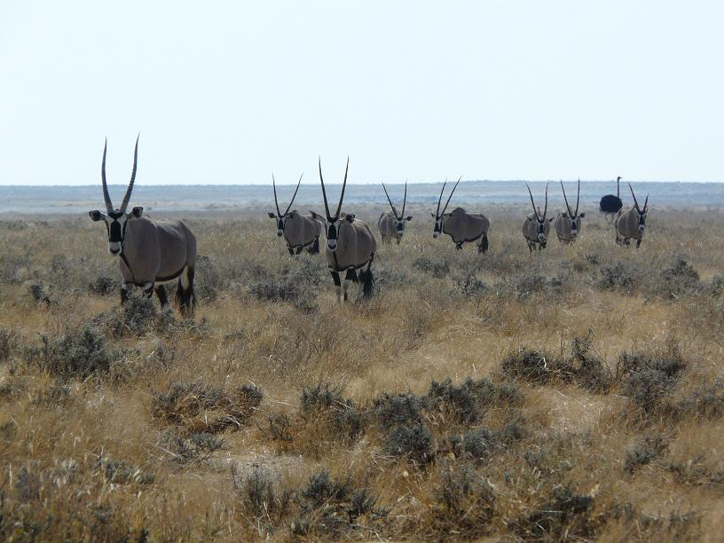 My notes on Namibia: Is a national park the same as a zoo?